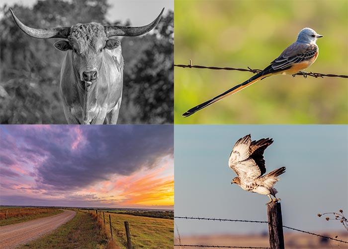 Postcard Greetings From Oklahoma by Crane Artworks LLC